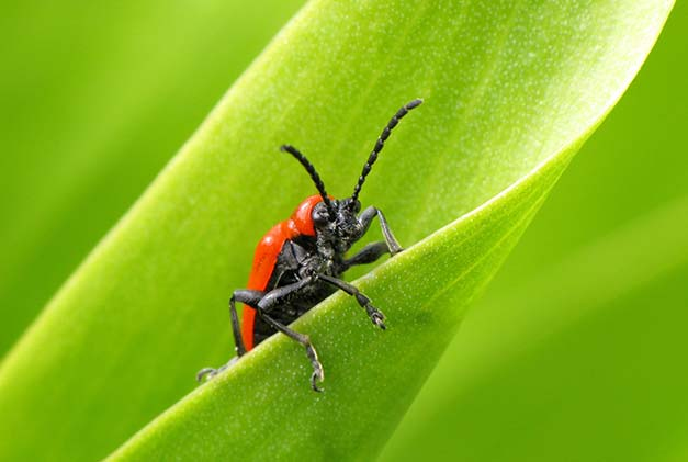 Local, Family-Owned Pest Control in Jacksonville Florida